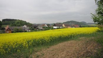 Pohled na obec Skalka z řepkového pole